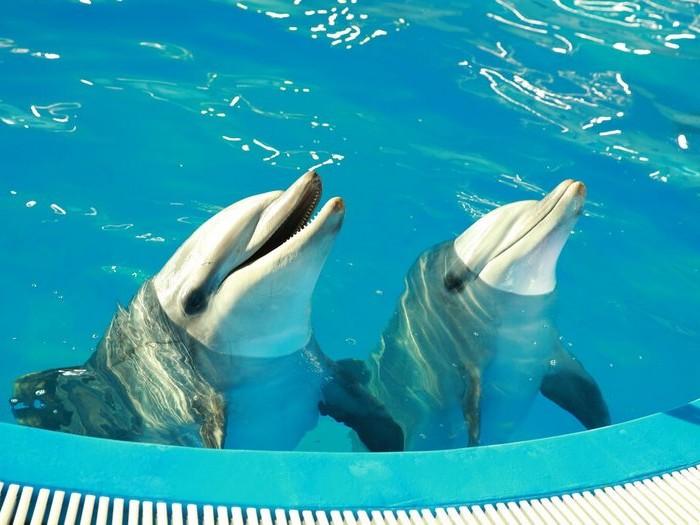 Дельфинарии Крыма