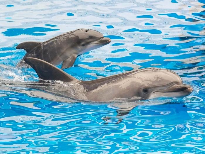 Добрые дельфины