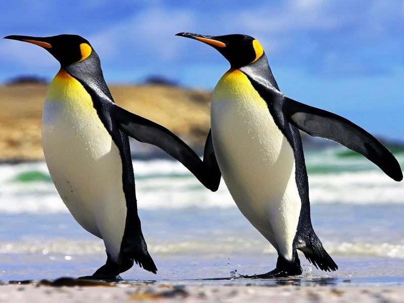 Пингвины помнят динозавров