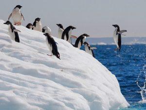 Прыжок пингвина