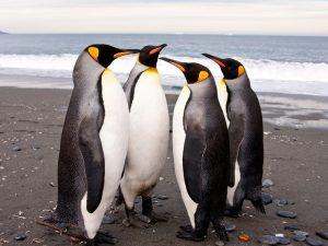 Пингвиний сходняк