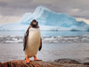 Умный пингвин