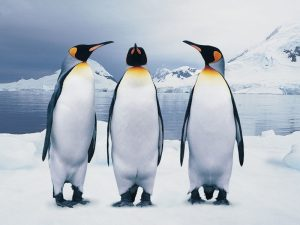 Всемирный день пингвинов