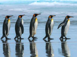 Пингвинья шеренга