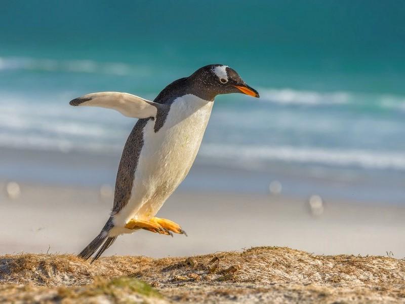 Красивый пингвинчик