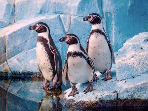 Красивые пингвинчики