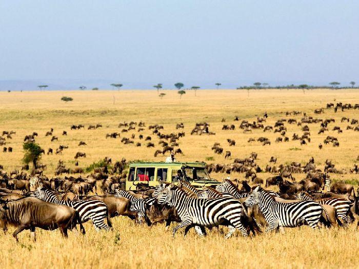 Серенгети-Танзания