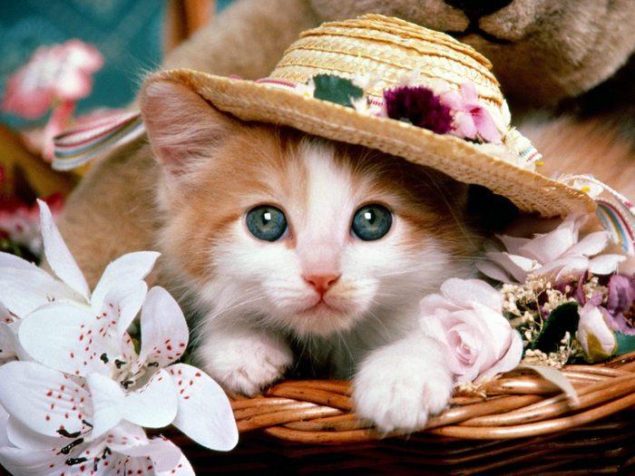Как вывести блох у котенка?