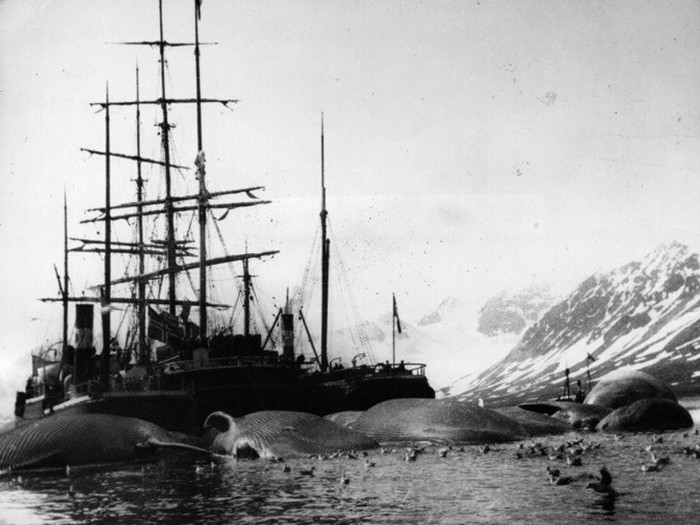 норвежские китобои