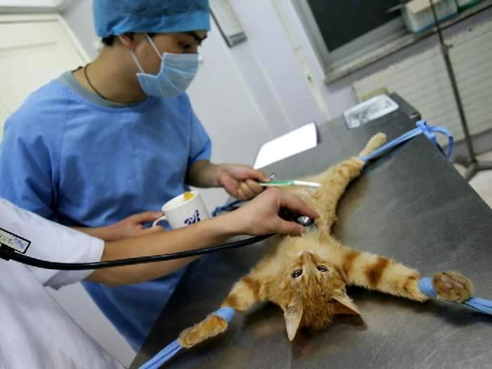 Стерилизация в клинике
