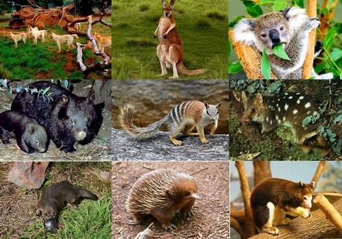 Картинки по запросу животные много