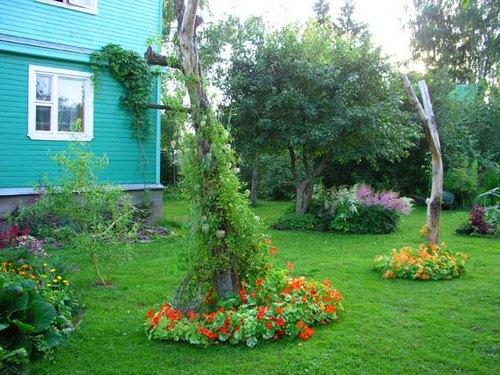 Настурция-цветы-История-виды-выращивание-настурции-2