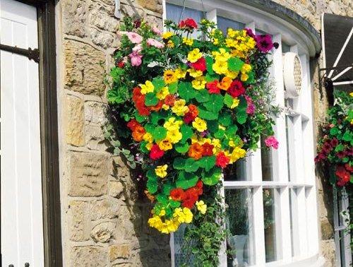 Настурция-цветы-История-виды-выращивание-настурции-3 width=